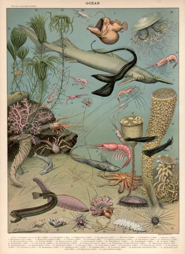 Underwater Seascape Antique Print 1897 Lithograph Ocean