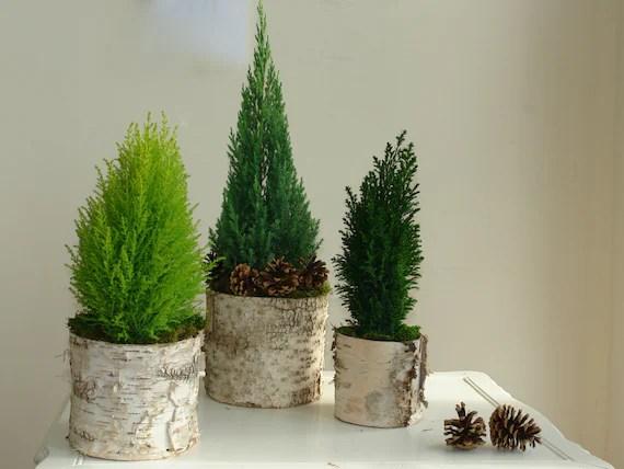 birch bark vases Christmas decorations ideas birch bark wood