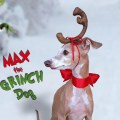 Max the grinch dog head antler for christmas pets dog or cat last