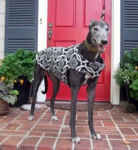 Custom Greyhound Dog Coat & Jacket XL Dog Coat Sighthound