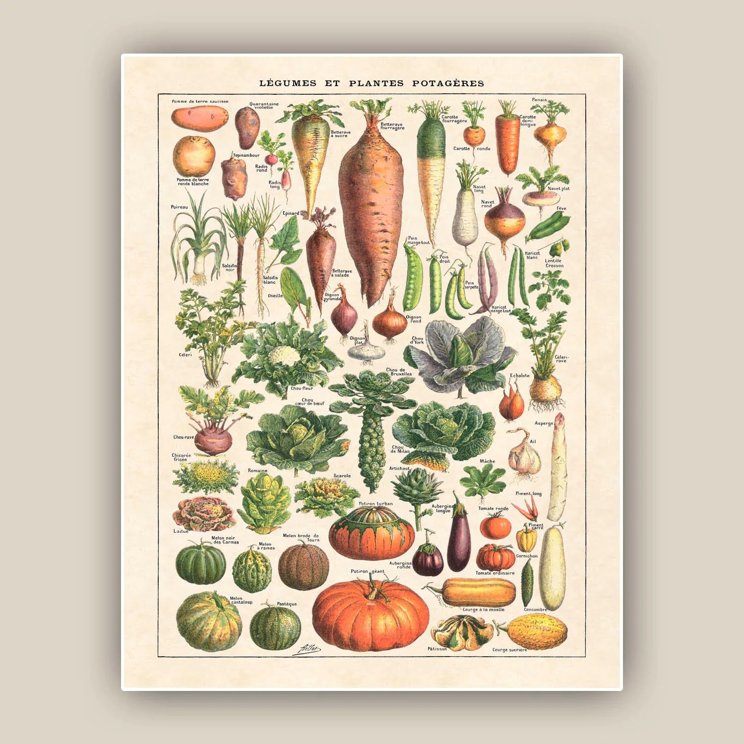 Kitchen art vegetables print botanicals kitchen art