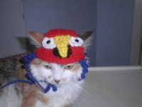 Crocheted Parrot Cat Hat Parrot Dog Hat Bird Hat for Cat