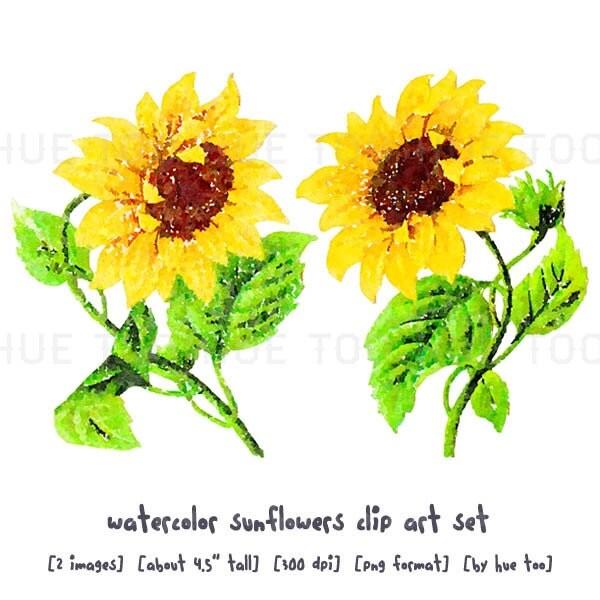 watercolor sunflowers clip art