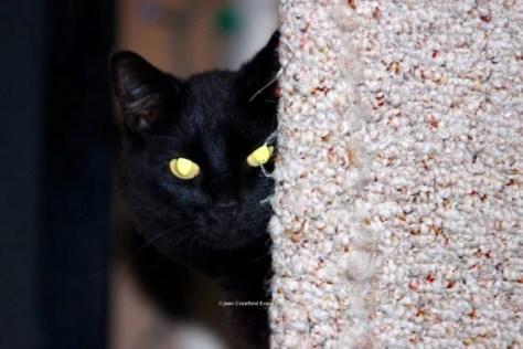 Peek-a-boo, I see you des...