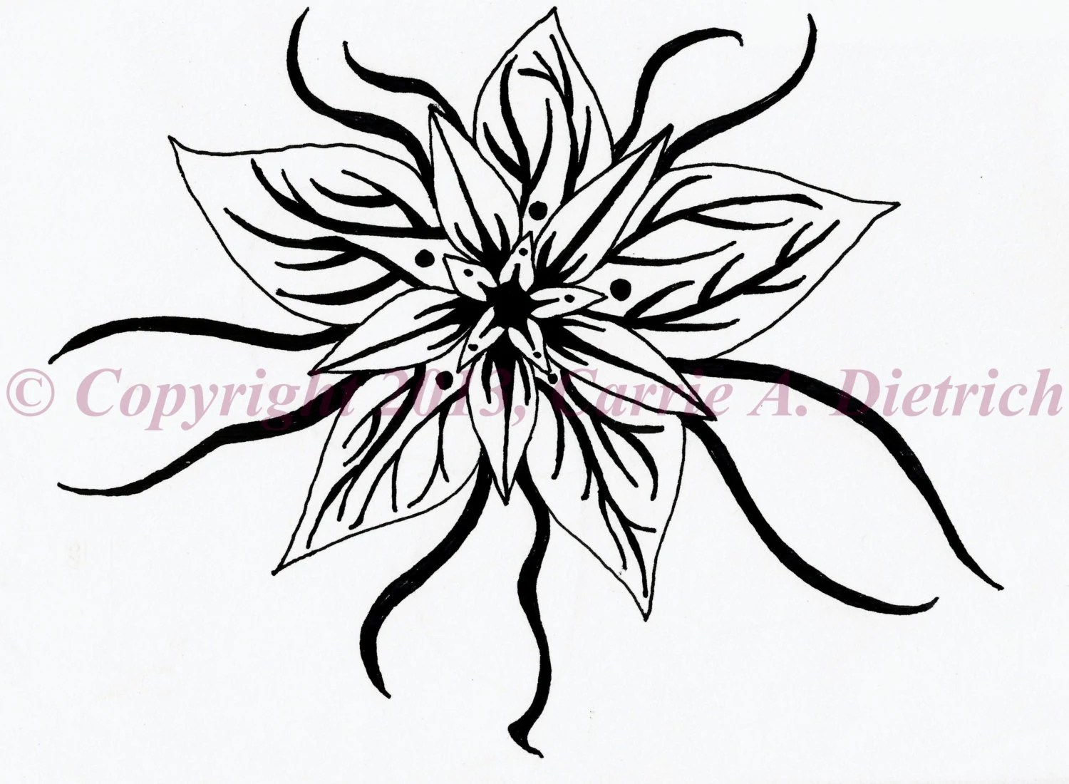 Black and White Art Pen and Ink Flower Star by