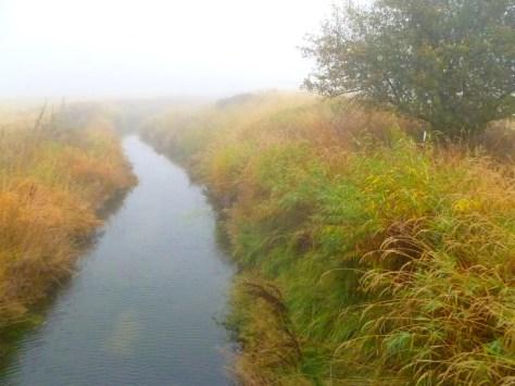 Foggy creek desktop wallp...