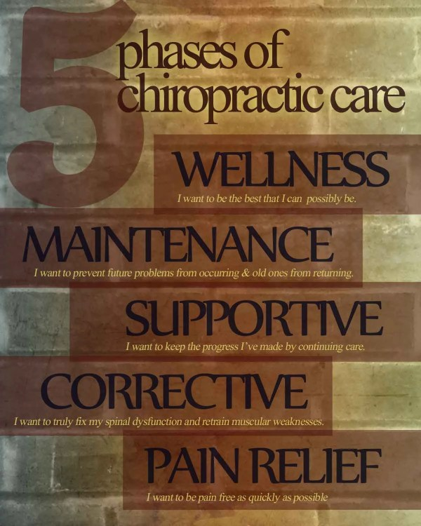 5 Phases Of Care Chiropractic Anatomy Artwork Clinicartwork