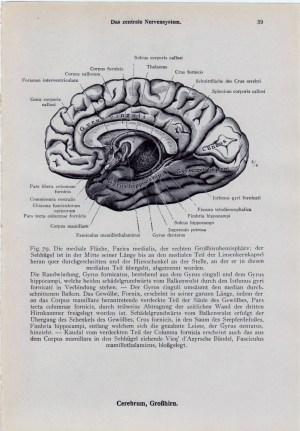 Vintage Medical Diagram Female Perineum Anus by