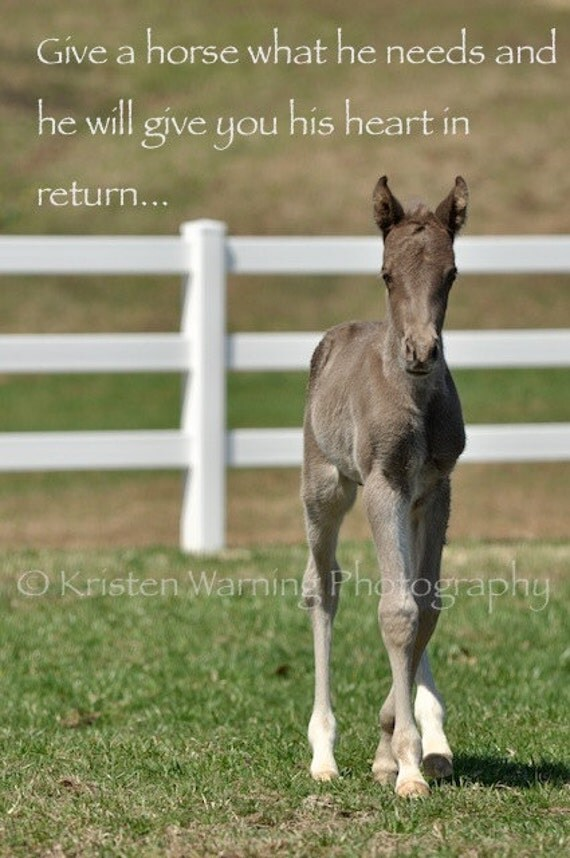 Foal Picture Inspirational Quotes Horses Foals