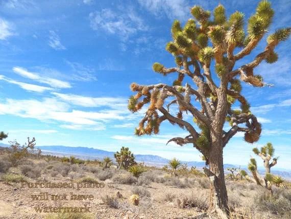 joshua tree cactus retro rustic