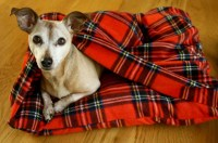 Dog Bed with Attached Blanket Fleece Dog by LittleSallieTomato
