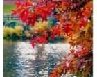 Landscape Photography- Fine Art Photography- Fall Color- Central Park- Fine Art Print