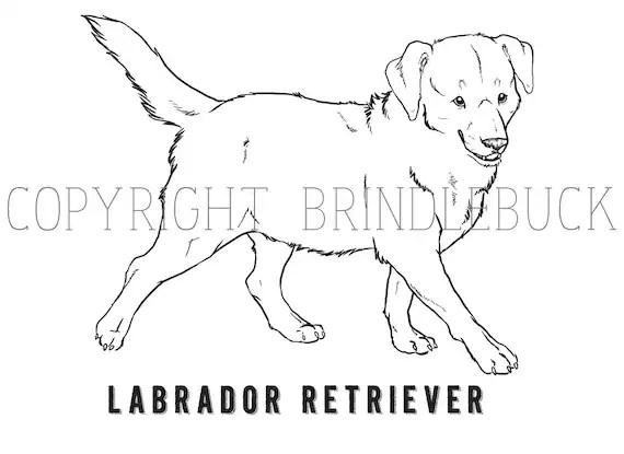 Items similar to Labrador Retriever Dog coloring page