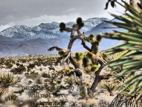 joshua tree cactus retro west
