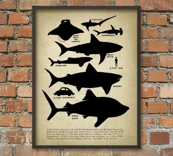 Shark Educational Wall Art Poster Size Quantumprints