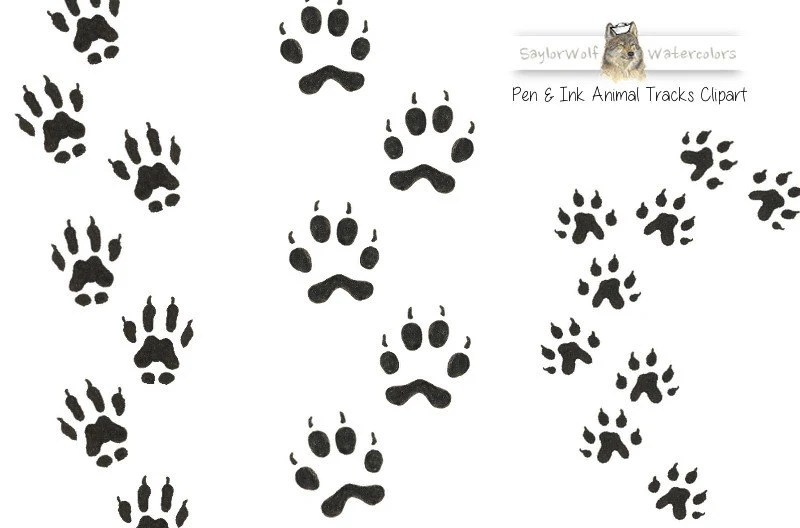 Hand-Drawn Wild Animal Tracks Clipart by SaylorWolfGraphics