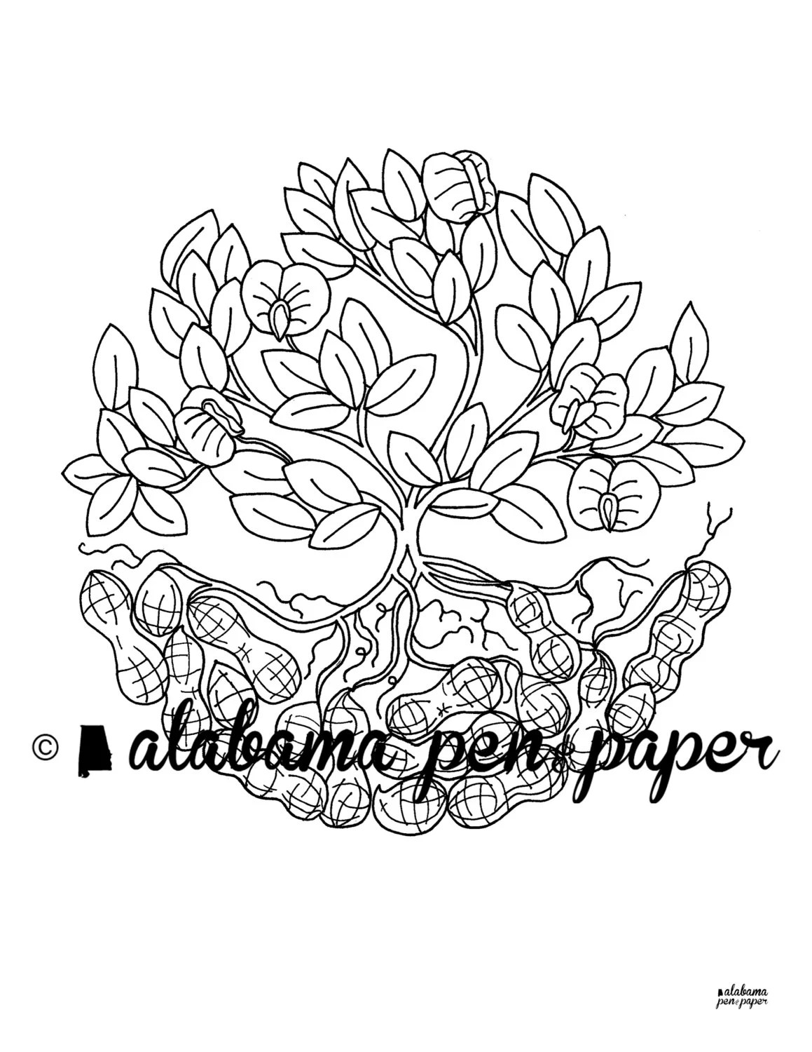 Peanut Plant Coloring Sheet