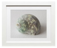 Items similar to Still Life Photograph - Seashell ...