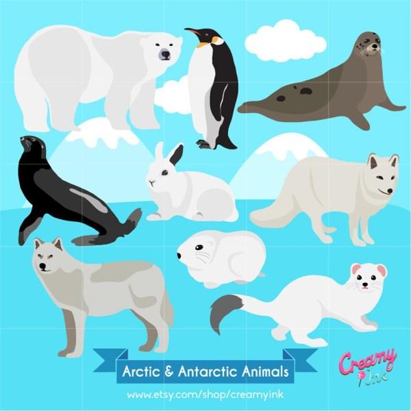 Animal Arctic Polar Bear Clip Art