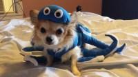 Dog or Cat Octopus Costume size small / medium S/M