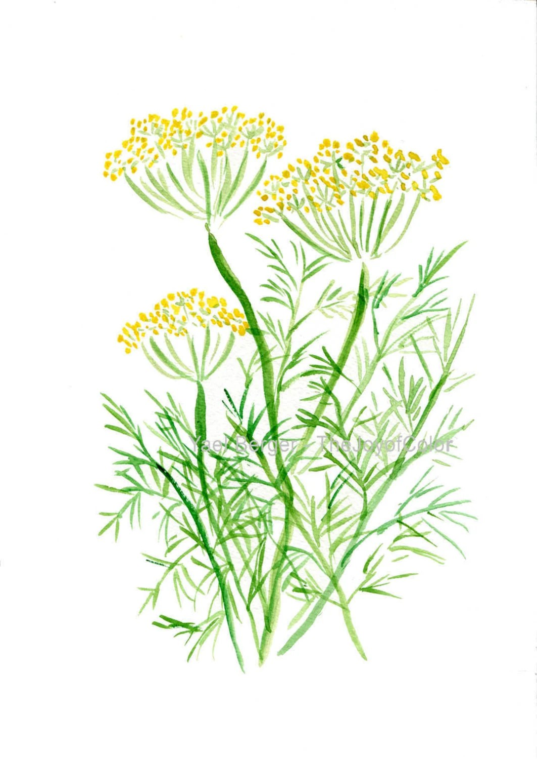 Dill Art Print Dill Watercolor Painting Herb By Thejoyofcolor