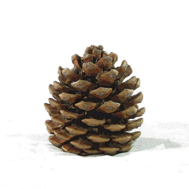 Pine Cone Wall Art - Home Design Ideas