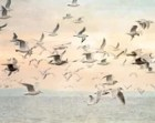 Beach Decor, Sea Gull Print, Ocean Print, Watercolour Print, Bird Photography, Pastel Wall Art, Seagull Photo, Flock of Birds, Ocean Art