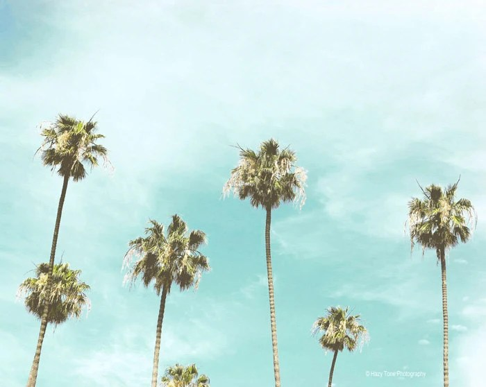 Palm Tree Photography California Wall Art Beach Wall Decor