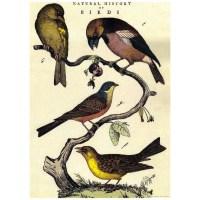 Decoupage Paper, Scrapbook paper, Birds, bird, birds on ...
