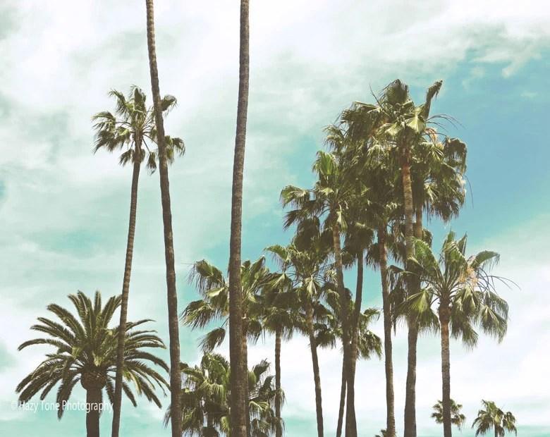 Palm Trees Art Photography Print Beach Wall Decor