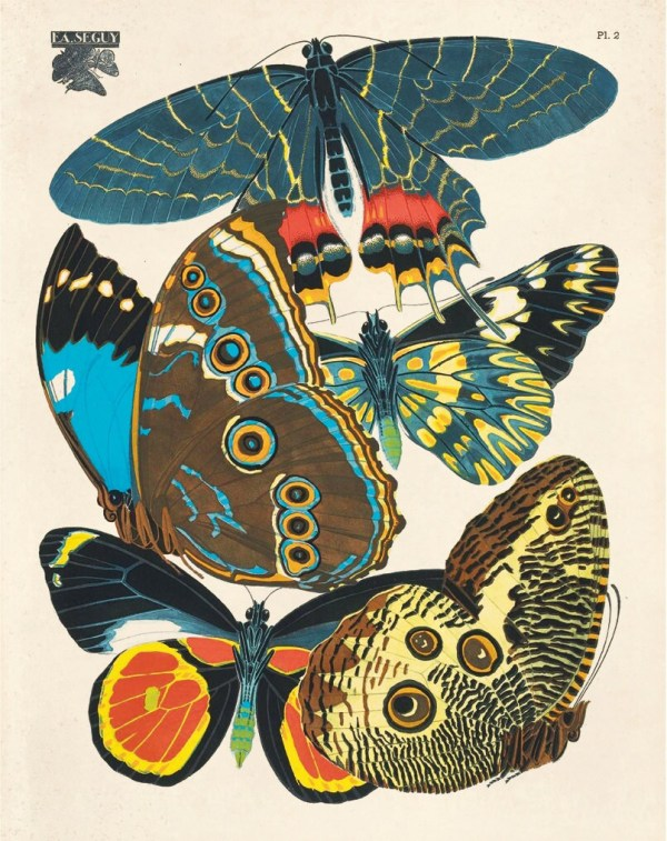 Vintage Butterfly Illustration Print Reproduction. French