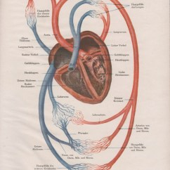Heart Diagram Outside 700r4 Lockup Wiring 1910 Human Anatomy Print Circulatory System Old