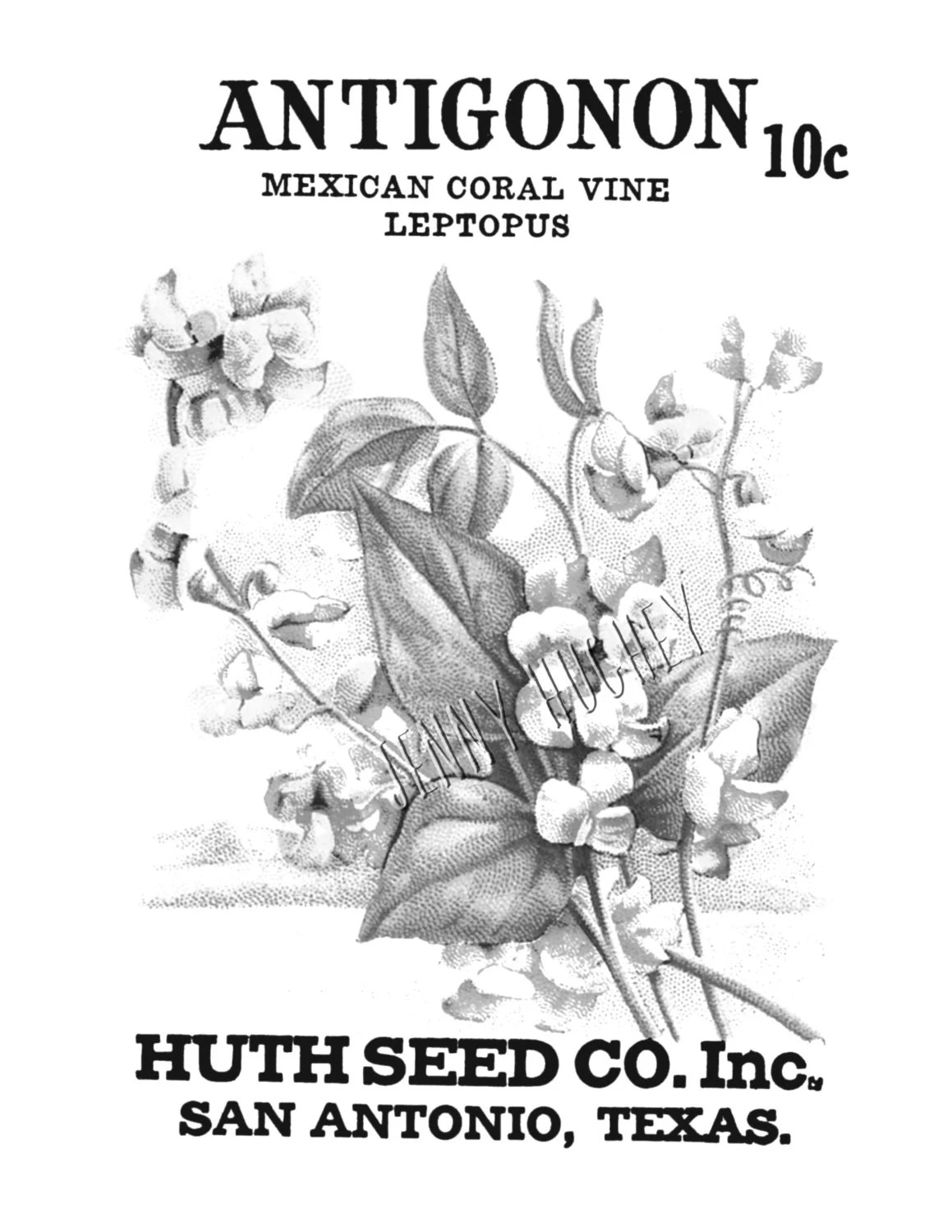 Printable Grayscale Seed Packet Antigonon Adult coloring
