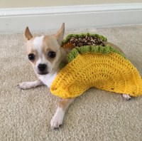 Taco Pet Costume Taco Cat Costume Taco Costume for Dogs