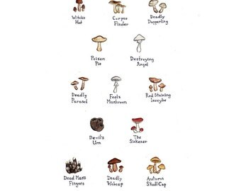 Western North Carolina Song Birds Field Guide Style Watercolor