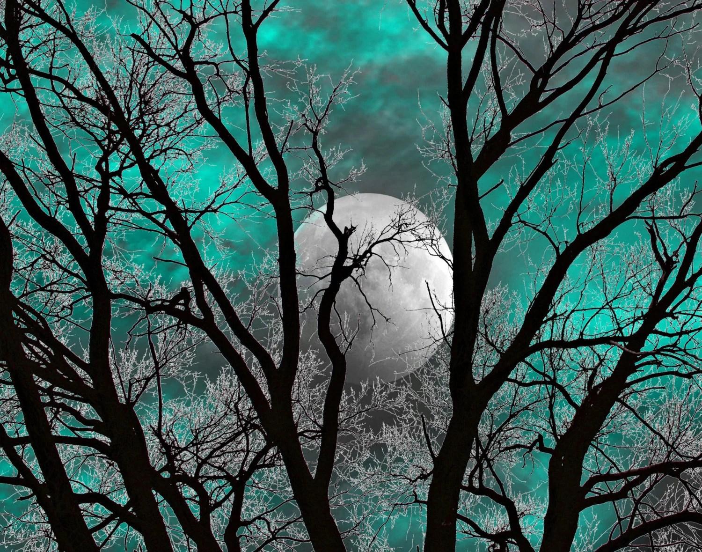 Teal Gray Wall Art Photography Tree Moon Decor Teal Home