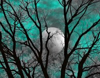Teal Gray Wall Art Photography Tree Moon Decor Teal Home
