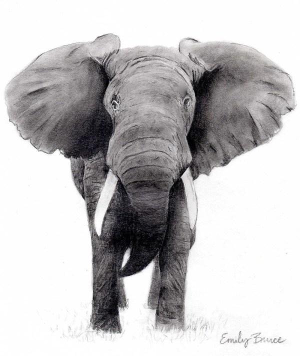 Elephant 8x10 Print Charcoal Black And White Art