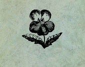 Pansy Flower LARGE - Anti...