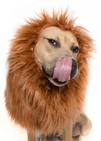 Lion Mane Wig for Large Dog Costume