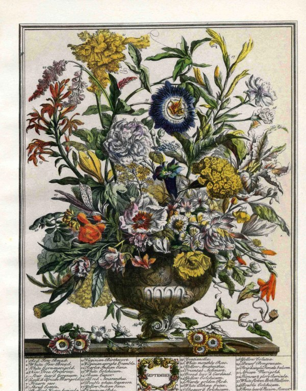 12 Months of Flowers Botanical Prints