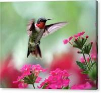 Canvas Wall Art Hummingbird Art Pink and by ChristinaRolloArt