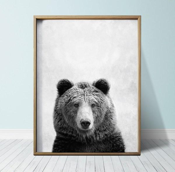 Download Bear Prints