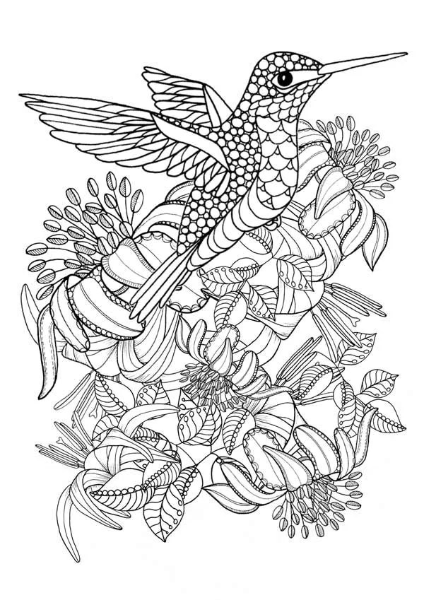 hummingbird printable coloring pages. digital download of