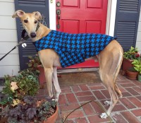 Greyhound Dog Coat & Jacket XL Dog Coat Cobalt Blue and