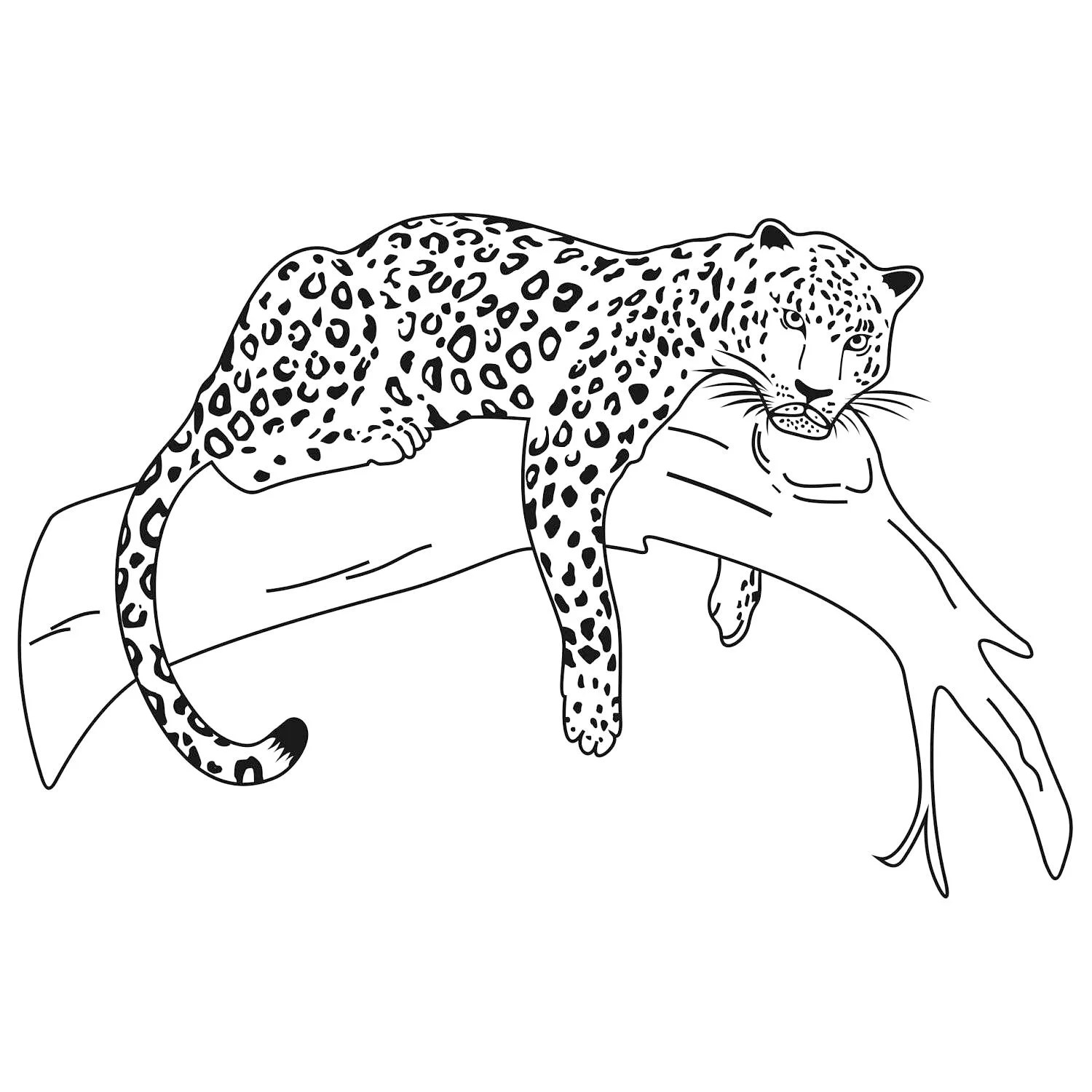 Leopard Wild Cat Graphics SVG Dxf EPS Png Cdr Ai Pdf Vector