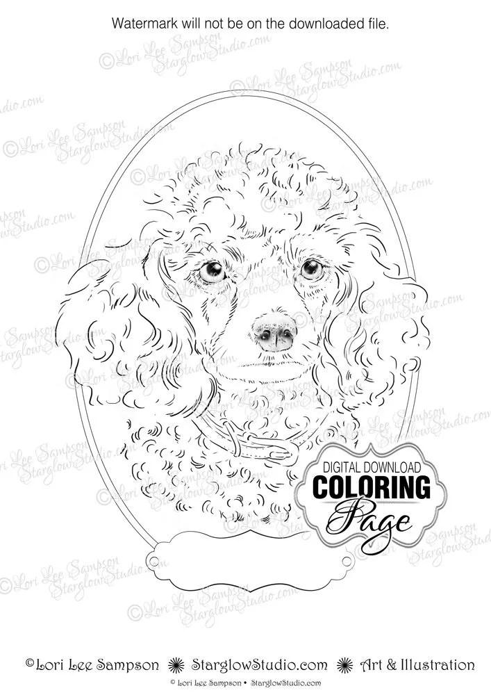 Coloring Page, Poodle Portrait Dog Art, Animal Art Digital