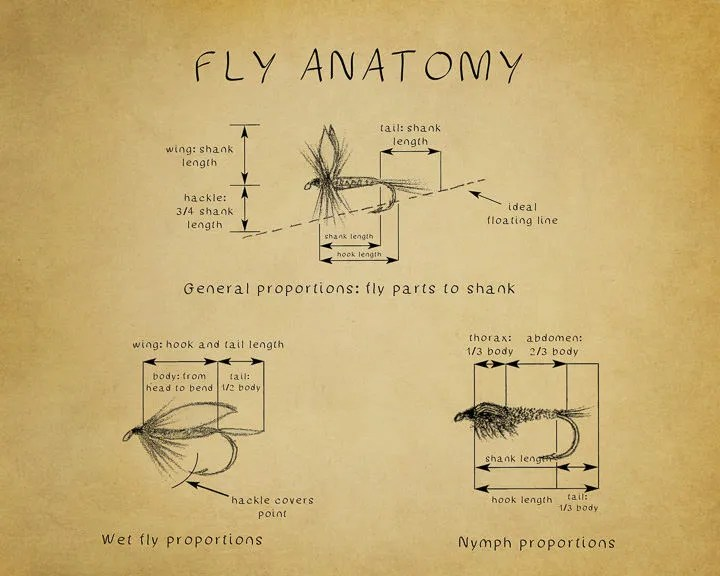 Fish Anatomy Diagram Trout Fish Anatomy Diagram