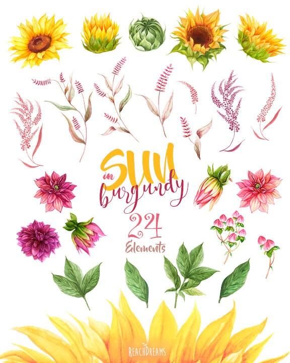 sunflowers dahlias. watercolor