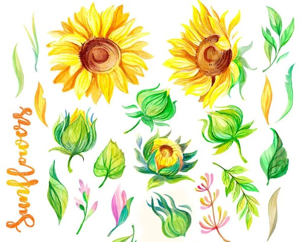 watercolor sunflowers clipart rustic